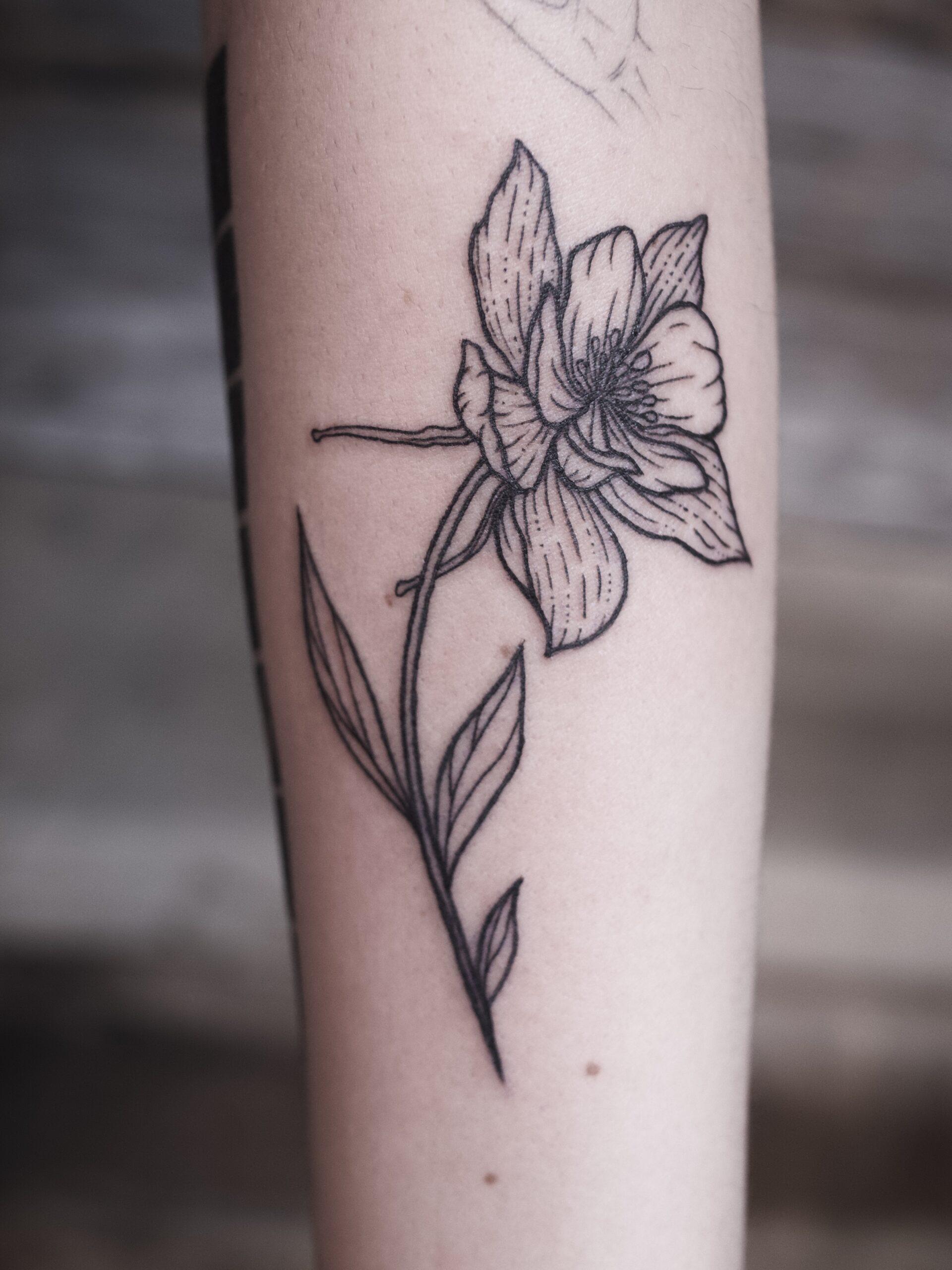 Rose Basargin 1